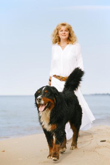 bernese mountain dog walks with woman at summer sea beach